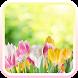 Tulip spring flower wallpaper by bill.app