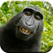 Funny Animals by Chempaka Apps