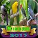 coleção de sons de pássaros by saudara app