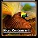 Kicau Suara Burung Cendrawasih by kangdeveloperstudio