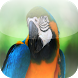 Macaw Parrots Birds Lover by BeeIdeas