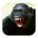 Angry Monkey Wallpaper 4K by Pusher Studios Developer