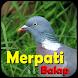 Juara Merpati Balap by TomzStudio