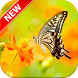 Butterfly Wallpapers by Fresh Wallpapers