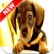 Dachshund Wallpapers by Fresh Wallpapers