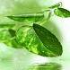 Green Leaf Shine Lwp by Daksh Apps