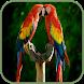 Bird sounds by karsoft