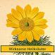 Heilpflanzen / Heilkräuter by Aurelian Schüler, Birgit Bauer