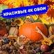 Осень Обои HD 4K Autumn Wallpapers