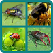 Угадай насекомое by DashikaGameLogics