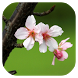 Flower Wallpapers HD by CMDev