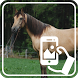 Photos of Horses by Addictive Free Apps