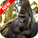 Gorilla Wallpapers by Fresh Wallpapers