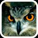 Aves de España by SEO/BirdLife