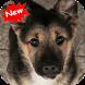 Puppies wallpaper by Seaweedsoft