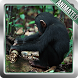 Monkey Live Wallpaper by CineGifWallpapers