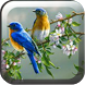 Kicau Burung Lengkap by Berkah Apps 11
