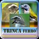 Todos em 1 |Canto Trinca Ferro by azalea.musicstudio