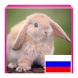 Learn Animals in Russian by RightStart eLearning