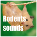 Rodents Sounds by HD Sounds Inc