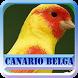 Canario Belga Campainha Completos by azalea.musicstudio