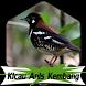 Suara Burung Anis Kembang + 1000 Kicau