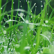Plant Japanese Grass by shak