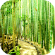 Bamboo Forest Live Wallpaper by Revenge Solution