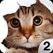 Find a Cat 2 - Hidden Object by Fox Art Games