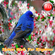 Nature Birds For Ringtones by supasiapp