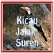 Kicau Suara Jalak Suren by zackapp