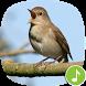 Appp.io - Nightingale bird song by Appp.io