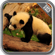 Panda Wallpaper by PhoenixWallpapers