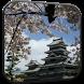 Sakura Video Live Wallpaper by Wallpapers Studio Pro