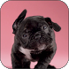 Puppy Shake Live Wallpaper by Wallpaper Joy