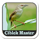 Master Kicau Ciblek