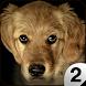 Find a Dog 2 - Hidden Object by Fox Art Games