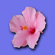 Maui Beach Vacation by Glad to Have You, Inc.