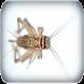 Crickets sounds by EliasWilliam