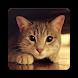 Cat Sounds - Alarm and Ringtones