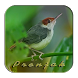 Kicau Burung Prenjak by Silalahi App