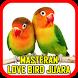 Suara Masteran Love Bird Juara