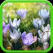 Spring Landscapes Wallpaper by Amax LWPS