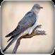 Cuckoo bird sounds