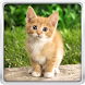 Cat Kittens Live Wallpaper by HQ Awesome Live Wallpaper