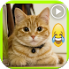 فيديوهات قطط مضحكة