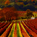 napa valley by amazing live wallpaper llc