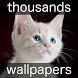 Animals wallpapers (cat, dog, bird, wolf, tiger) by Creative apps and wallpapers