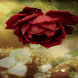 Beautiful Red Rose LWP by Daksh Apps