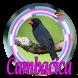 CANTO DO SIBITE CAMBACICA CLASSICO by DosenDev